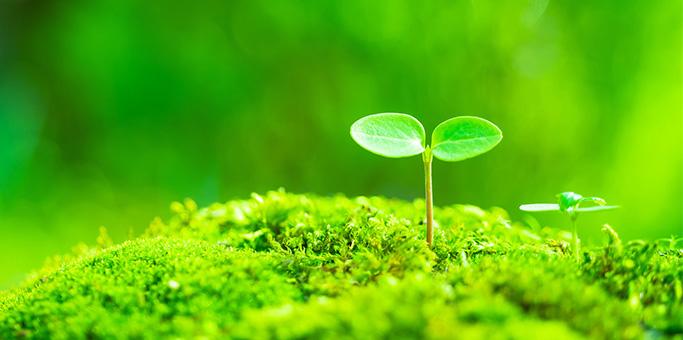環境への取り組み